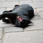 jaspar_2013_07_yawn