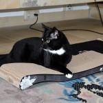 mari_2014_02_cat-on2