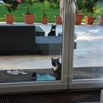 Teil 195 – Die defekte Tür