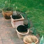 baba_maunz_1997_08_topfpflanzen