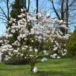 magnolie_2014_03_isfrid