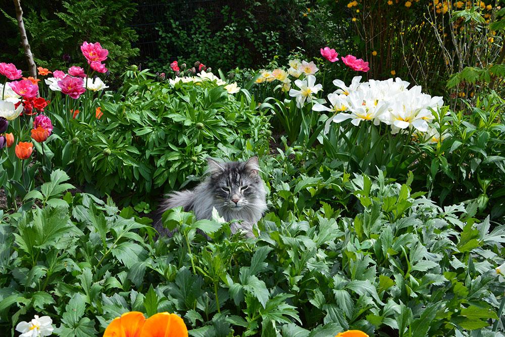 Teil 282 – Flora und Fauna