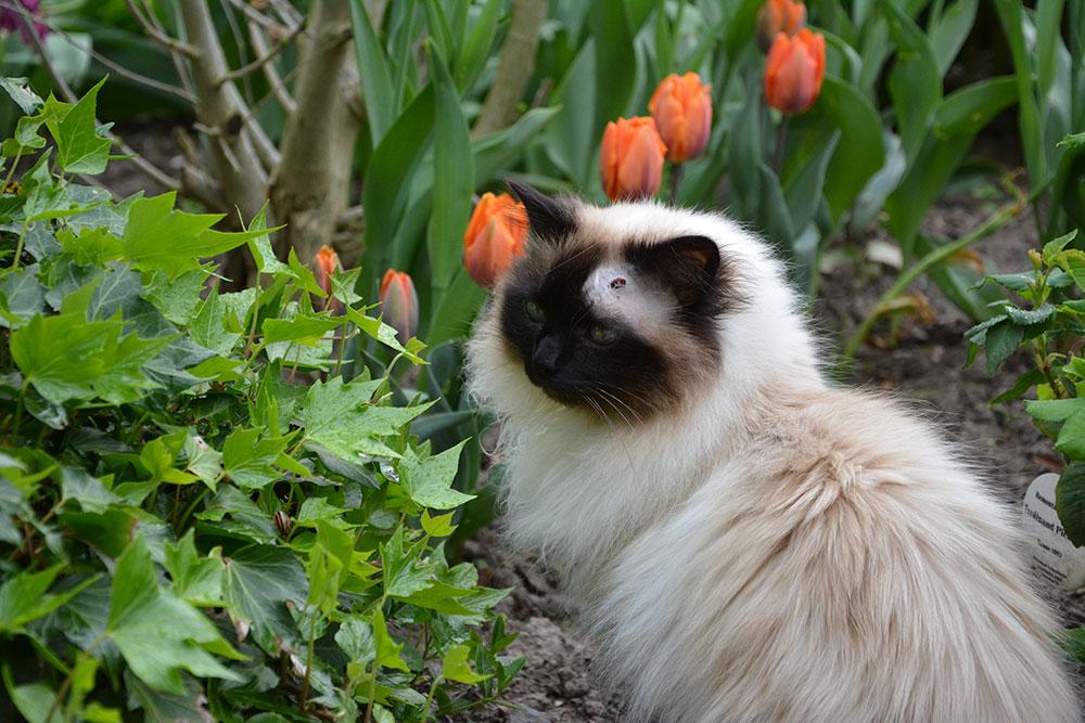 Teil 278 – Tulpenbeet II