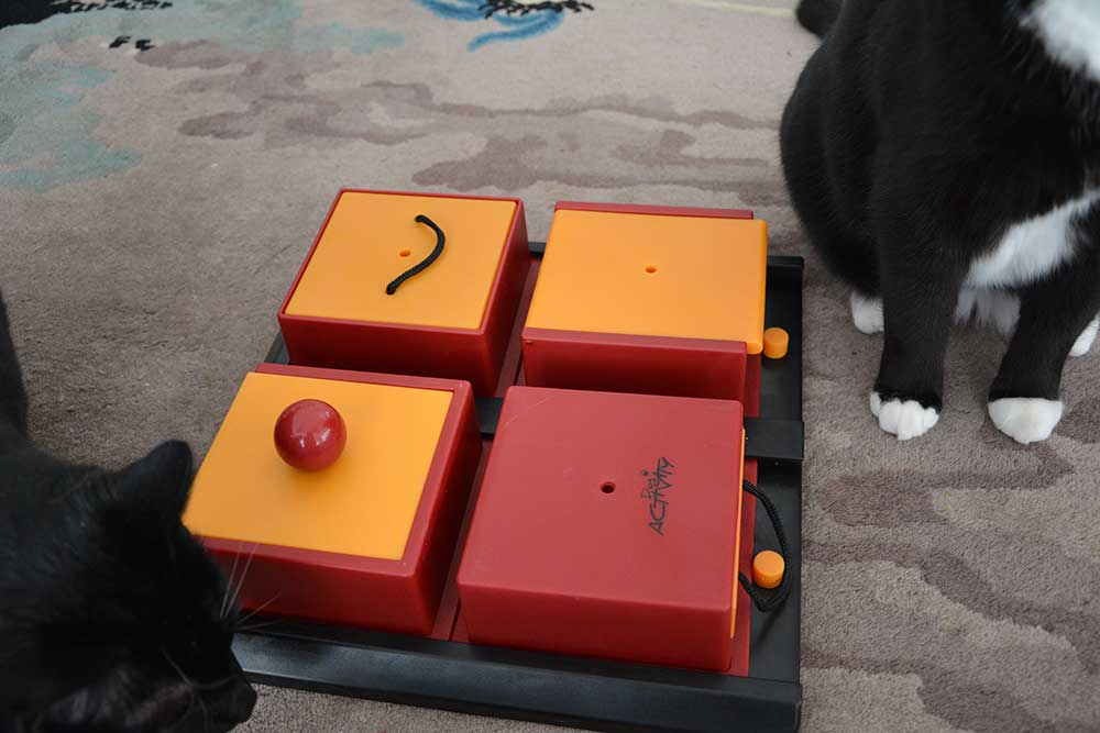 Special: Katzenfummelbrett – Activity / Intelligence Toys II