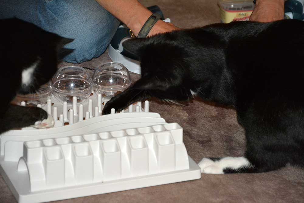 Special: Katzenfummelbrett – Activity / Intelligence Toys I