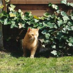 ginger_2001_04_young1