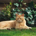 ginger_2001_04_young4