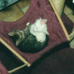 humpy_lina_1998_08_haengematte