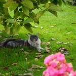 islay_2014_09_magnolie