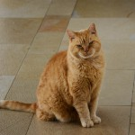 ginger_2014_10_vollportrait2