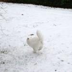 isfrid_2014_12_snowrun
