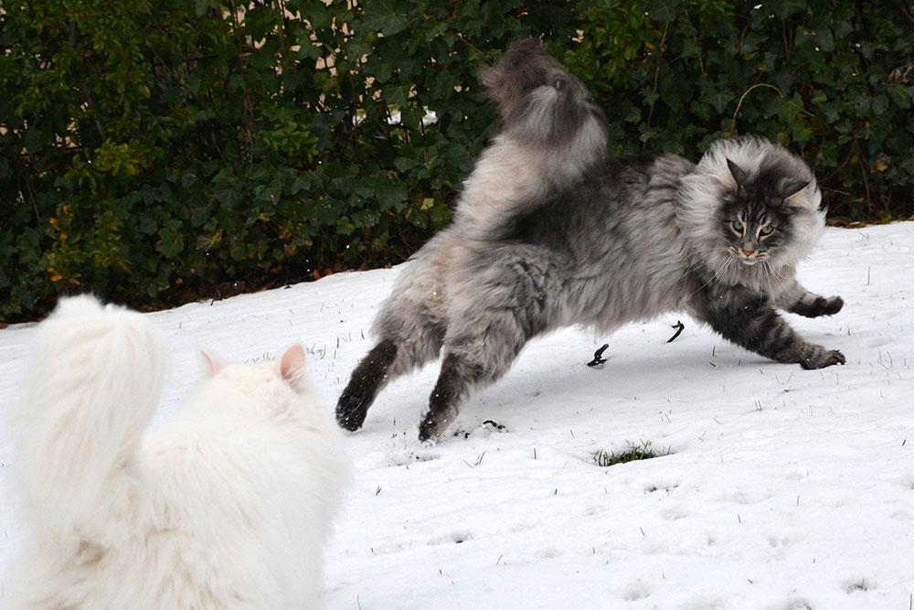 Teil 428 – Schnee!
