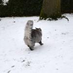 islay_2014_12_snowrun