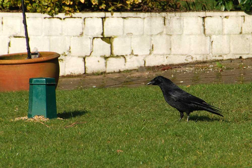 Teil 447 – Die Vögel