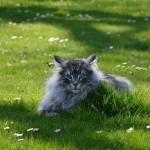 islay_2015_04_15_lawnmowerproblem