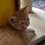 sander_150711_yawn1