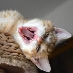sander_150727_yawn2