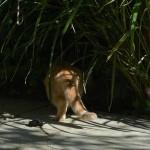sander_150927_tigergras