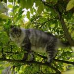 islay_151006_magnolie2