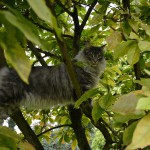 islay_151006_magnolie5