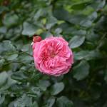 rosen_2015_10_a