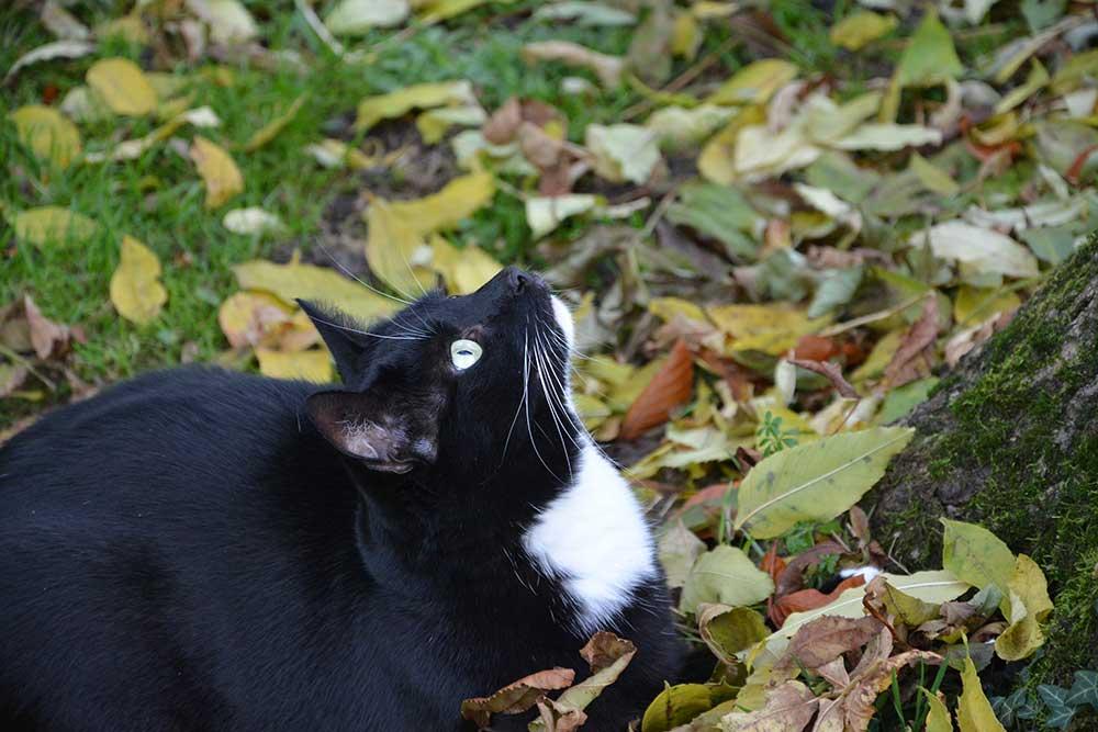 Tierschutz-Special – Marvis Traum