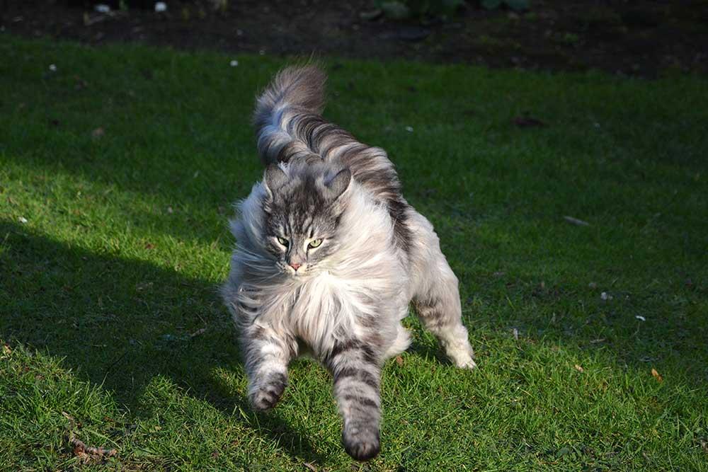 Teil 541 – Katzenballett