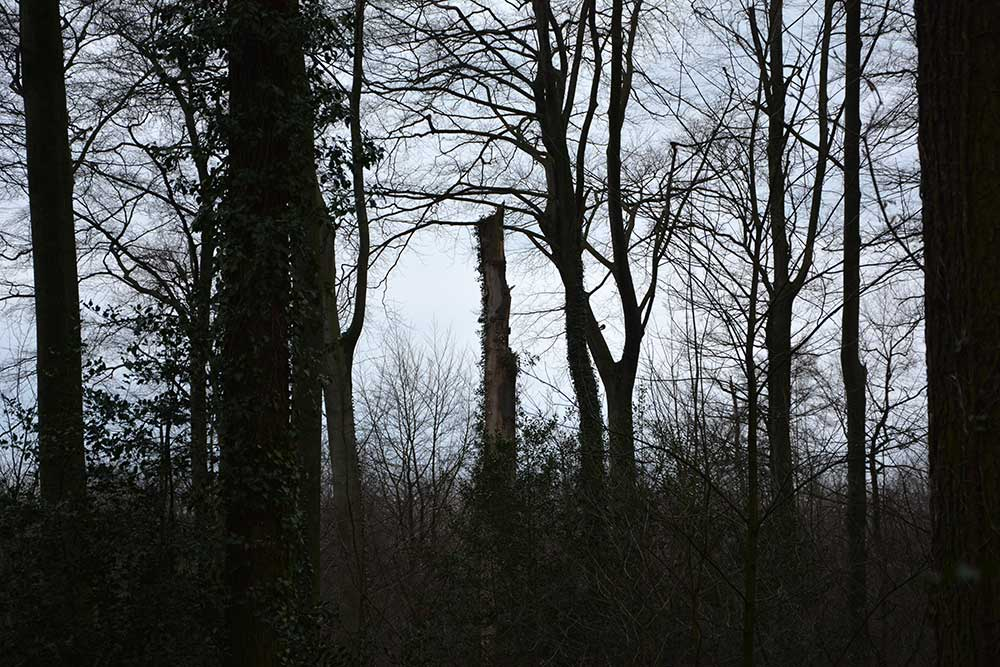 Teil 549 – Im Märchenwald I