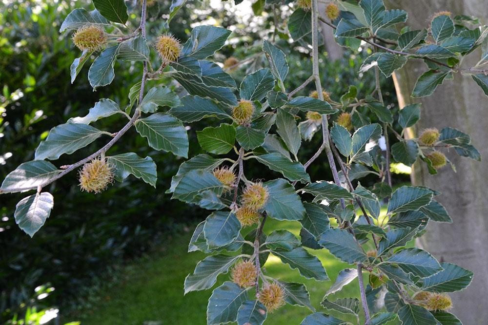 Teil 632 – Der Garten im Juli II