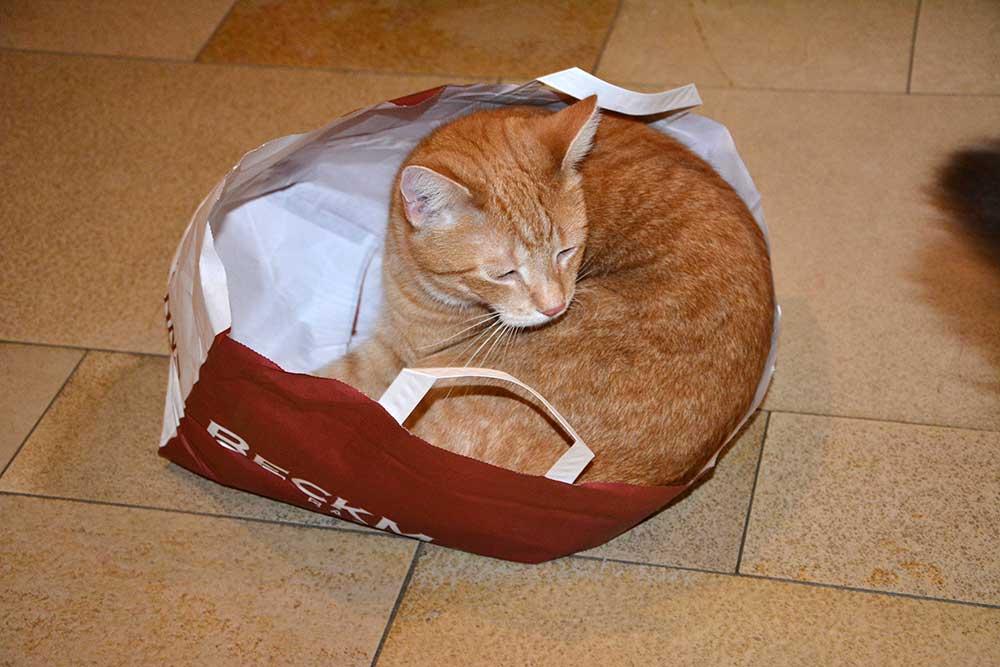sander_2016_10_paperbag