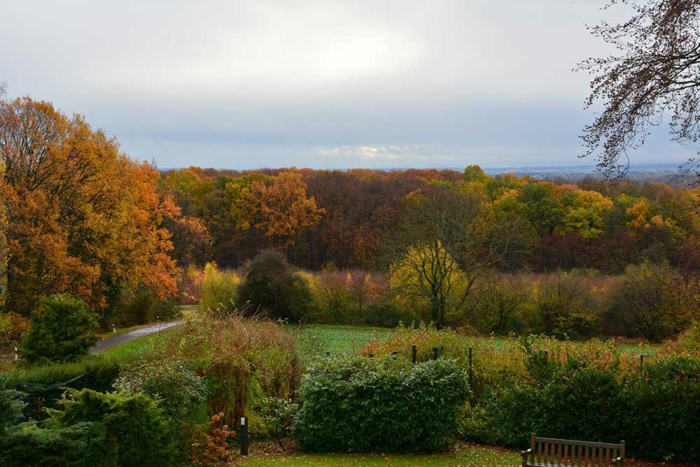 Teil 682 – Der Garten im November