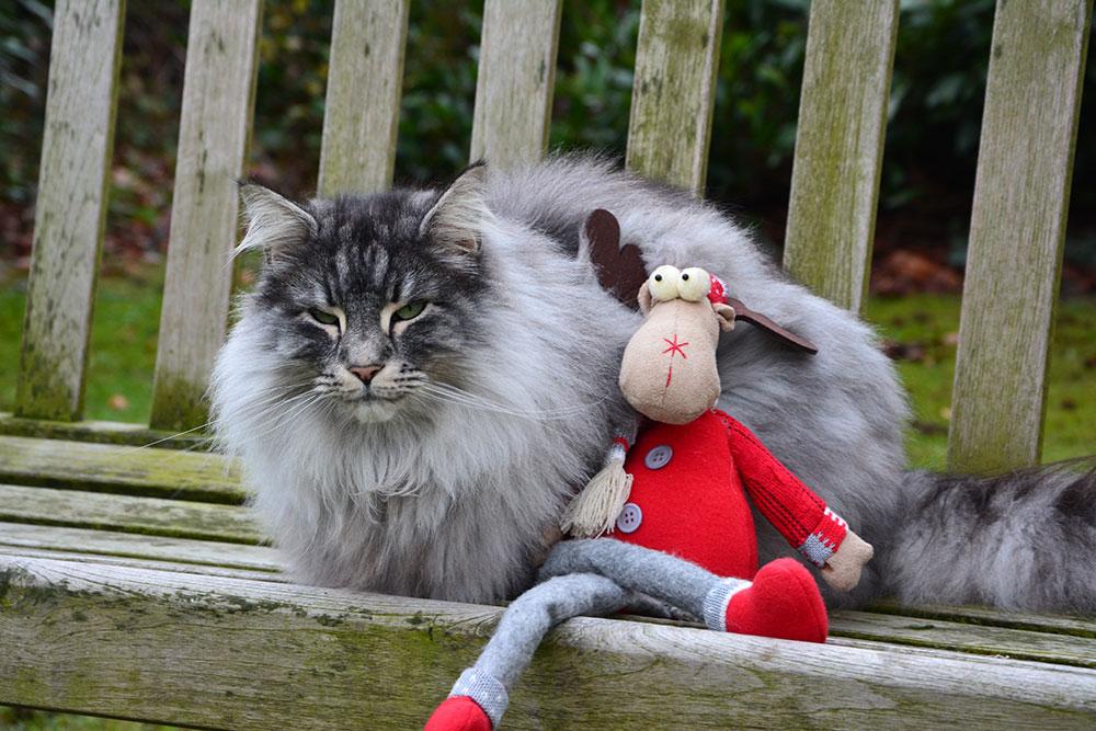Special: Christmas Cat 2016