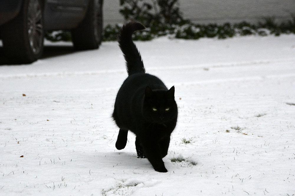 Teil 693 – Schwarze Katze von links