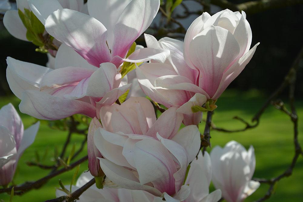 Teil 748 – Der Garten im April